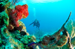 Discovering the Underwater world Scuba Diving