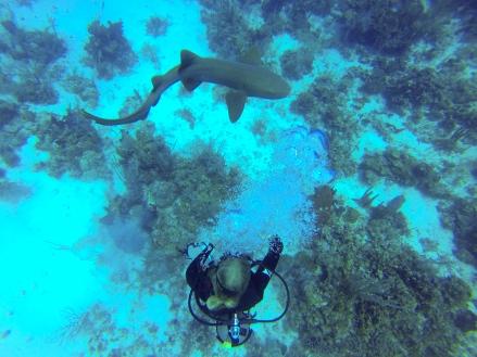 Nurse Shark on the Reef
